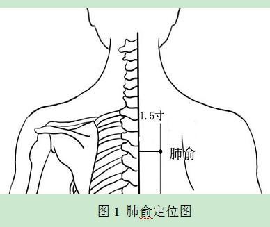 肺俞定位图